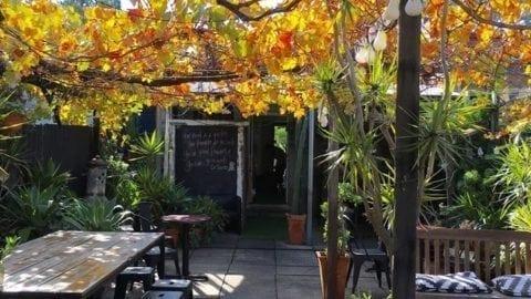 Little Olive Tree Cafe