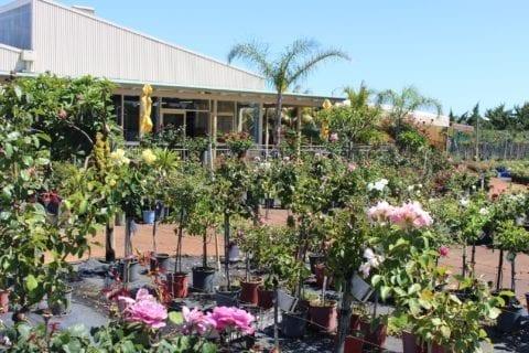 Café Bloom at Roworth's Rose Nursery