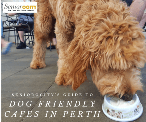Dog Friendly Cafes in Perth