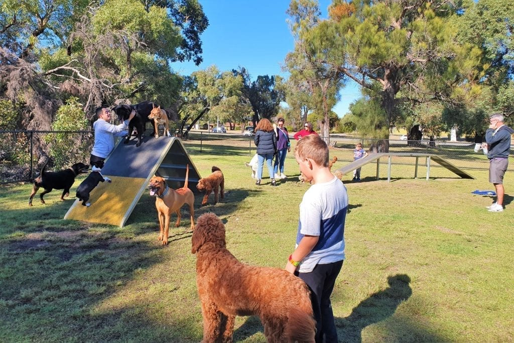 Places to Take Your Dog in Perth - Dog Parks, Dog Friendly Garden