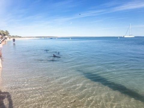 The Dolphin Experience at Monkey Mia