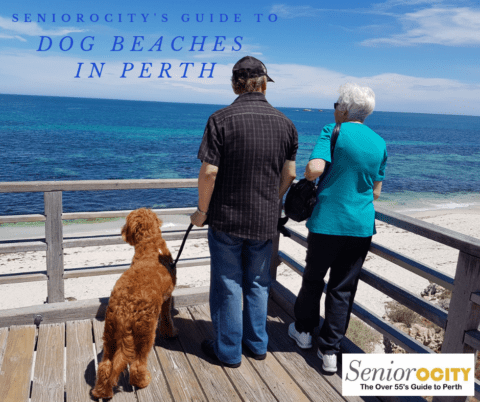 Dog Beaches in Perth