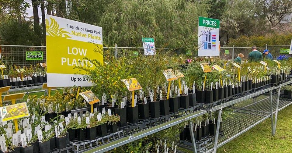 Friends of Kings Park Festival Native Plant Sale 2019
