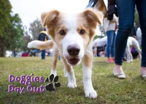 Doggies Day Out 2019